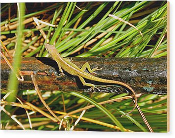 Wood Print featuring the photograph Lizard by Cyril Maza