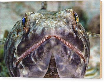 Lizard Fish Wood Print
