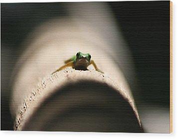 Lizard On A Log Wood Print