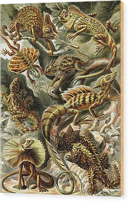 Lizards Lizards And More Lizards Wood Print by Unknown