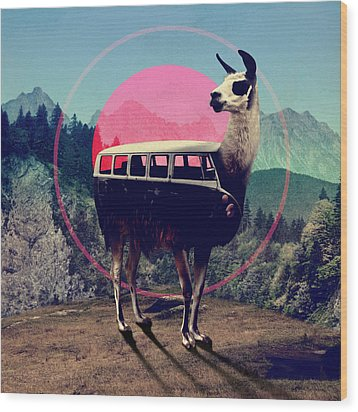 Llama Wood Print by Ali Gulec