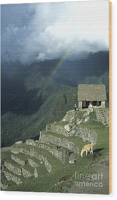 Llama And Rainbow At Machu Picchu Wood Print by James Brunker