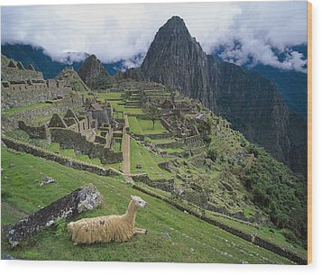 Llama At Machu Picchus Ancient Ruins Wood Print