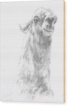 Wood Print featuring the drawing Llama Close Up by Andrew Gillette