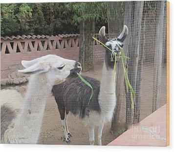 Llamas In Peru Wood Print