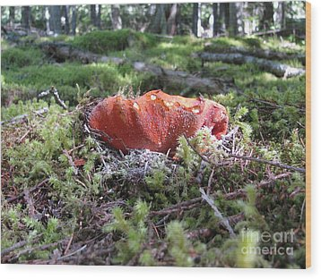 Lobster Mushroom Wood Print