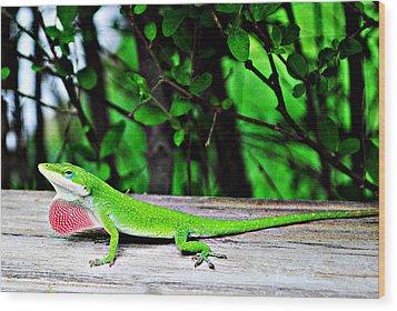 Local Lizard Wood Print by Stephanie Grooms