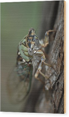 Wood Print featuring the photograph Locust by Susan D Moody