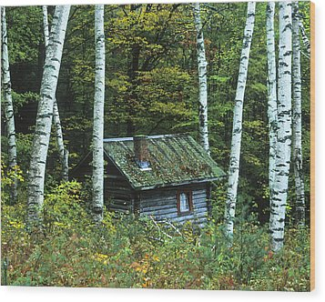 Log Cabin In The Birch Forest Vermont Wood Print by Joe  Palermo