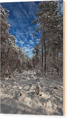 Logging Trail  Wood Print by John Harding