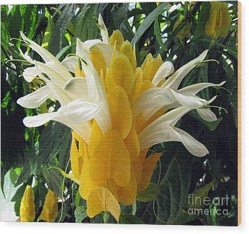 Lolliepop Plant Wood Print