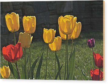 Lollipop Tulips And Grass And Stone Wall Wood Print by Byron Varvarigos