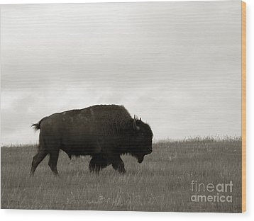 Lone Bison Wood Print by Olivier Le Queinec