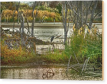 Lone Blue Heron In Fall Wood Print by Kimberleigh Ladd