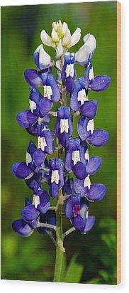 Lone Bluebonnet Wood Print by Dee Dee  Whittle