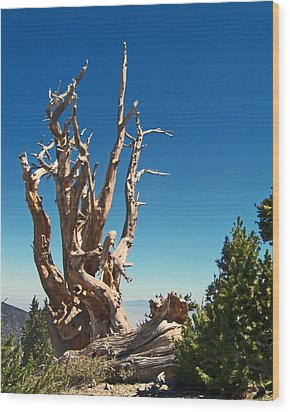 Wood Print featuring the photograph Lone Bristlecone by Alan Socolik