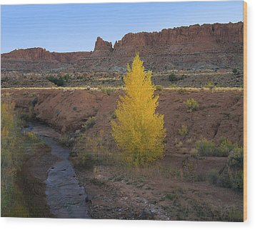Lone Cottonwood Wood Print