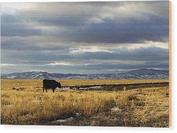 Lone Cow Against A Stormy Montana Sky. Wood Print by Dana Moyer