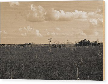 Wood Print featuring the photograph Lone Cypress by Gary Dean Mercer Clark