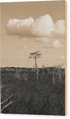 Wood Print featuring the photograph lone cypress III by Gary Dean Mercer Clark