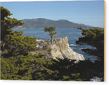 Lone Cypress On 17-mile Drive  Wood Print