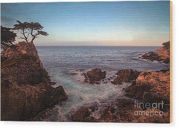 Lone Cyprus Pebble Beach Wood Print by Mike Reid
