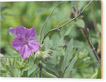 Lone Geranium In Yellowstone Wood Print by Bruce Gourley