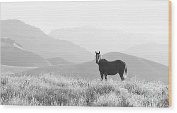 Lone Horse Wood Print by B Christopher