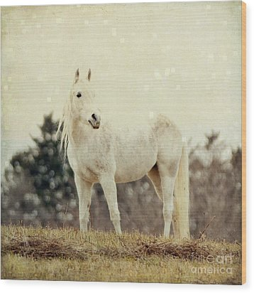 Lone Horse Wood Print by Diane Miller