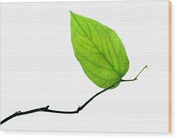 Lone Leaf Large Wood Print by Dan Holm