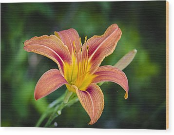Wood Print featuring the photograph Lone Lily by Bradley Clay