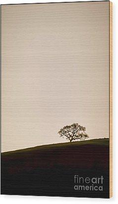 Lone Oak Tree Wood Print by Holly Martin