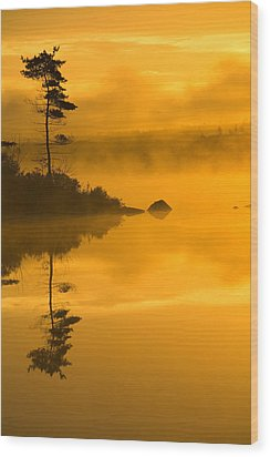 Lone Pine And Misty Lake At Dawn Wood Print by Irwin Barrett