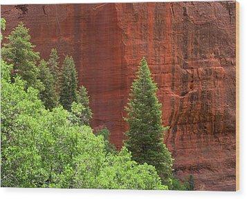 Lone Pine At Kolab Wood Print