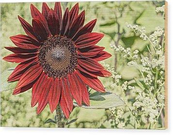 Lone Red Sunflower Wood Print by Kerri Mortenson