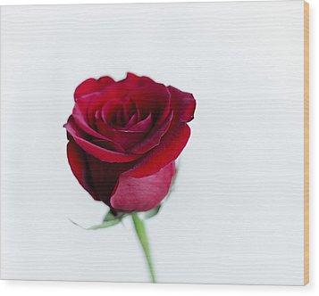 Lone Rose Wood Print by Christi Kraft
