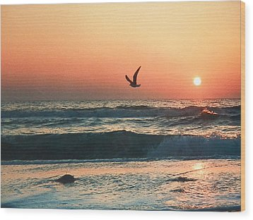 Lone Seagull Sunset Flight Wood Print by Belinda Lee
