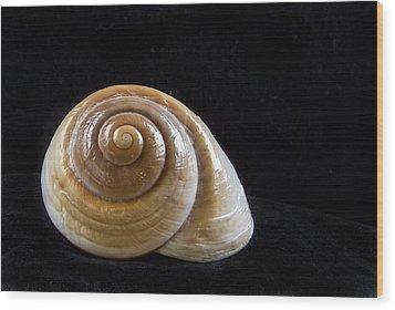 Lone Shell Wood Print by Jean Noren
