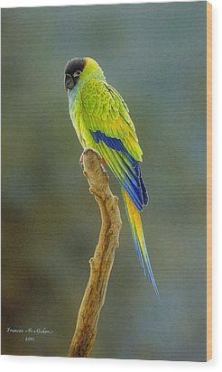 Lone Star - Nanday Conure Wood Print by Frances McMahon