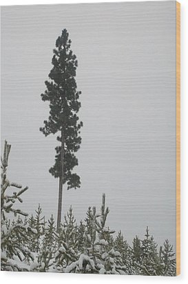 Lone Survivor Wood Print by Jewel Hengen