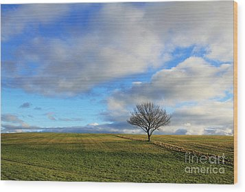 Lone Tree At Epsom Downs Uk Wood Print