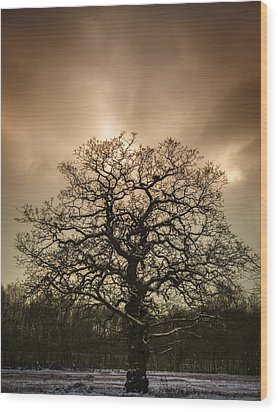 Lone Tree Wood Print by Amanda Elwell