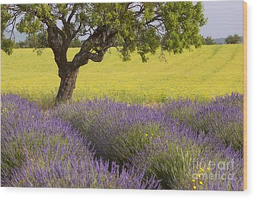 Lone Tree In Provence Wood Print by Brian Jannsen