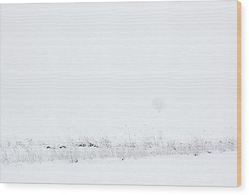 Lone Tree In Snow Wood Print by Mary Bedy