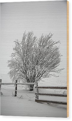 Lone Tree Wood Print by John Haldane