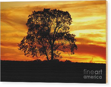 Wood Print featuring the photograph Lone Tree by Mary Carol Story