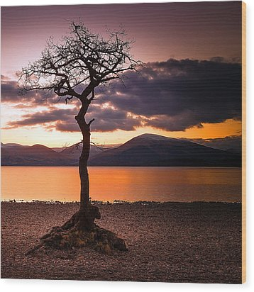 Lone Tree Of Loch Lomond Wood Print by Fiona Messenger