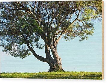The Lone Tree Original Wood Print
