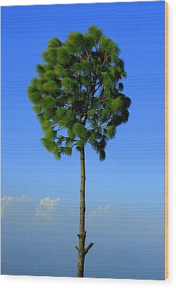 Lone Tree Wood Print by Salman Ravish