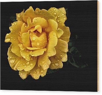 Lone Yellow Rose Wood Print